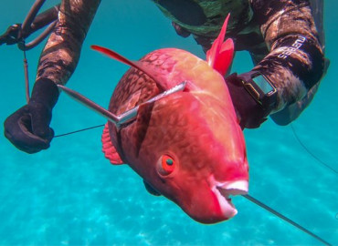 Snorkeling, Spearfishing & Fishing